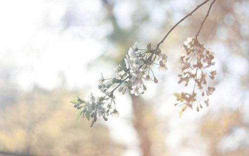 wallpaper-lens-flare-photo-02