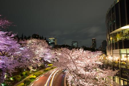 78882899 - illuminated cherry trees along the street at tokyo midtown,minato-ku,tokyo,japan in spring,2017.