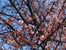 9GATES-陽光桜