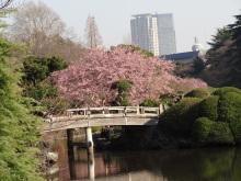 9GATES-修善寺桜2